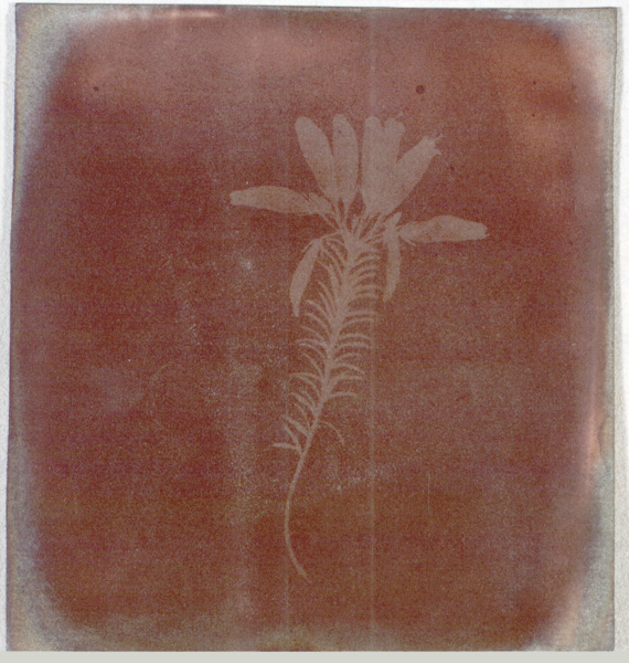 W. H. Fox Talbot dated March 1839