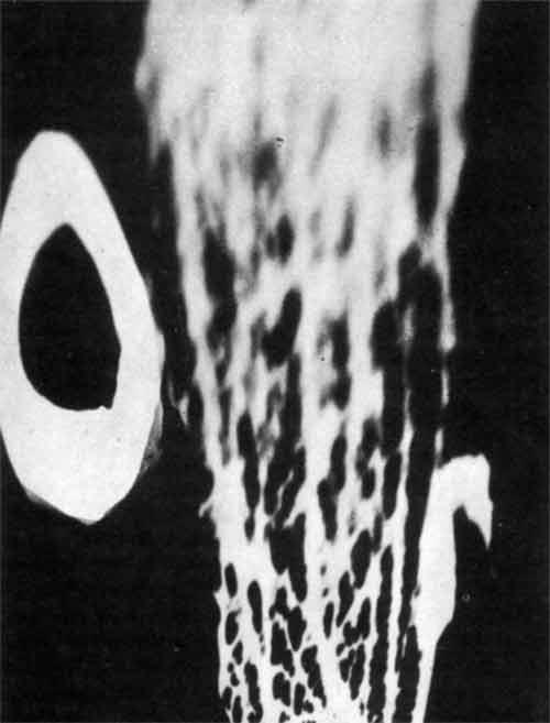 06_Кристиан Шад 1919